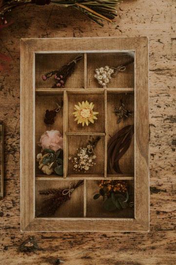 Herbarios portada categoría